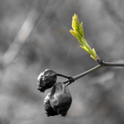 Frühlingserwachen - frisches Grün