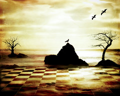 Alfred Hitchcock Presents (Michael Brooking Photography) Tags: ocean trees sun tree bird water birds island nikon board chess pelican textures layers checkers chessboard d700 alfredhitchcockpresents michaelbrookingphotography