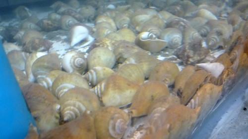 Koh Samui Starry Seafood @ ban Makharm サムイ島 スターリーシーフード0