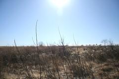(Cassie Robinson) Tags: november blue winter sky sun fall oklahoma field reserve bison 2009 pawhuska