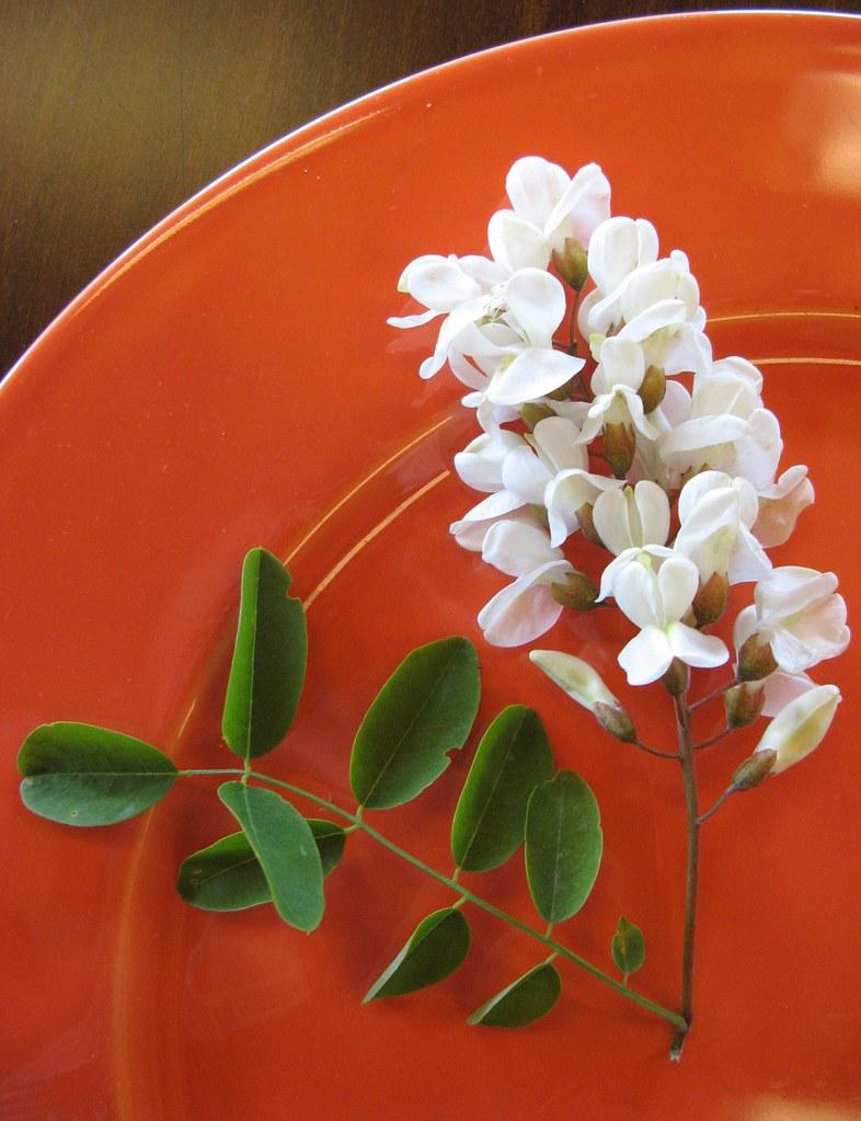 fiore d'acacia