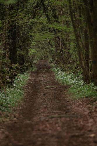 Forrestroad