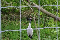 Crane thru fence