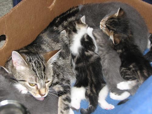 Kittens 5-16-10 001