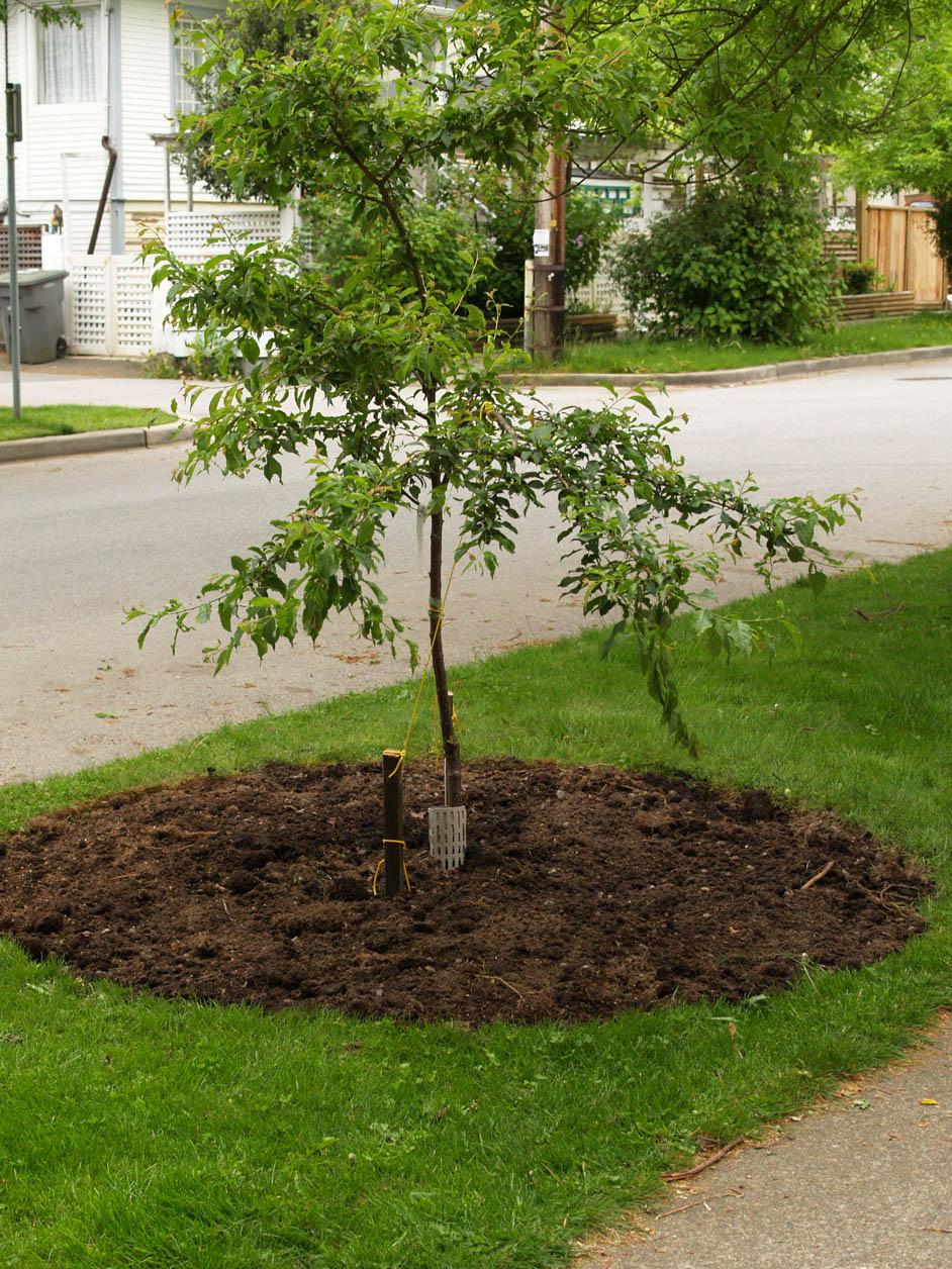 Boulevard Tree Garden 2