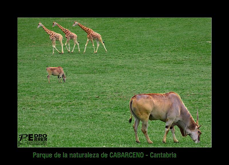 Cabárceno - cromos de animales