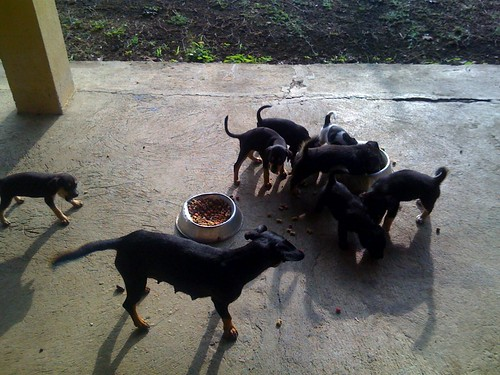 """Puppy pandemonium! • <a style=""""font-size:0.8em;"""" href=""""http://www.flickr.com/photos/28749633@N00/4630477060/"""" target=""""_blank"""">View on Flickr</a>"""