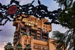 Tower of Terror at Disney's California Adventure (Greg Nutt) Tags: california travel friends fun wed disney canon10d rides anaheim processed canoneos attractions topaz wdi disneylandresort topazlabs