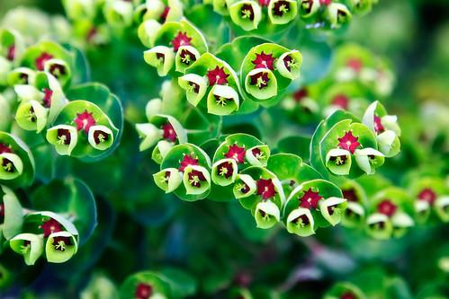 Petite Blooms