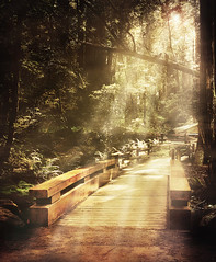 Muir Woods - bridge (CowGummy) Tags: colour nature forest landscape photography woods dream muirwoods fantasy rays dreamlike sunrays muir escapism alternativereality canon400d cowgummy stevenmeyerrassow