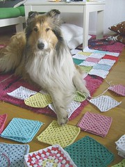 mummys little helper (malinmaskros) Tags: dog square collie granny