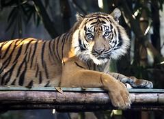 Zoo 24