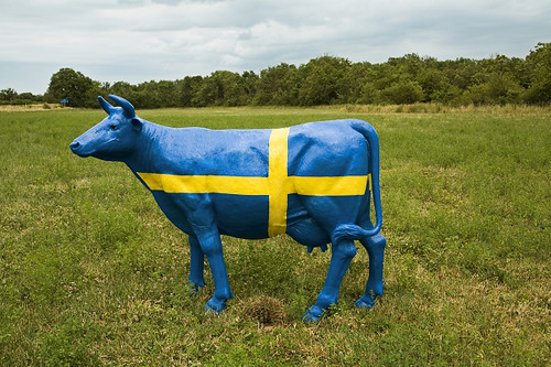 Cow with a Swedish flag