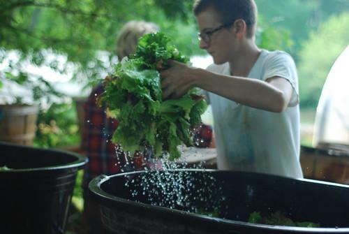 Washing lettuce