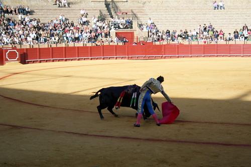 Dianas- Spain 2010 377