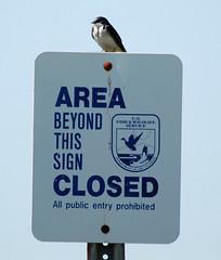 Standing Guard (Billtacular) Tags: bird nature outdoors newjersey spring wildlife birding nj birdwatching edwinbforsythenationalwildliferefuge thewonderfulworldofbirds