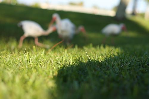Green Grass And Good Eats