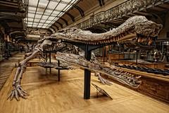 croco (erick.go) Tags: paris os bone jardindesplantes galeriedepaleontologie