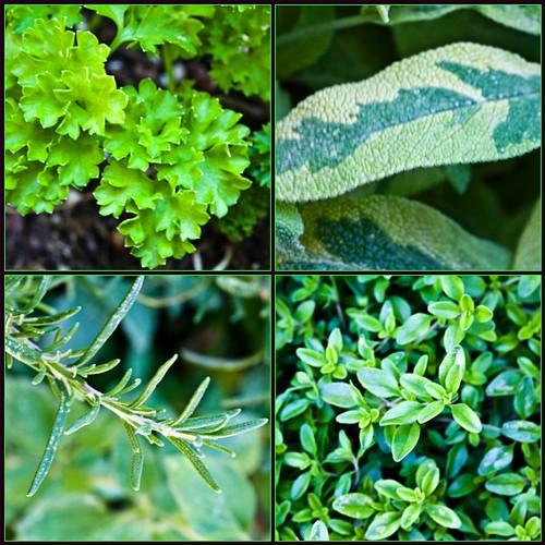 garden fdsflickrtoys mosaic sage rosemary 100views 500views parsley herb thyme parsleysagerosemaryandthyme