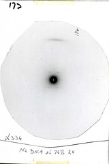 Half plate slide no. 173: Na DNA at 75 % relative humidity (1956) (DNA and Social Responsibility) Tags: dna kingscollegelondon biophysics mauricewilkins xraydiffraction