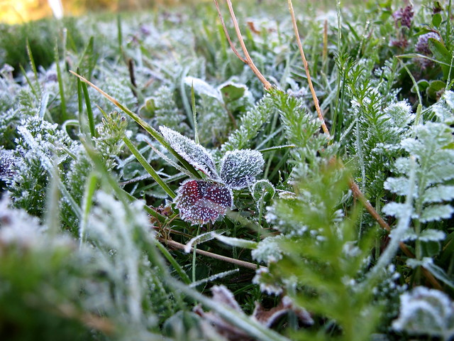 First Frost October 14, 2010