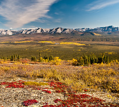 View From Ogilvie Ridge (Marc Shandro) Tags: autumn canada fall nature beautiful landscape view bright outdoor scenic sunny yukon remote daytime wilderness majestic untouched picturesque uninhabited brilliant pristine expanse dempsterhighway grandness ogilviemountains