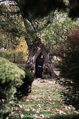 Alice Go Down the Rabbit Hole (peglegmeghan) Tags: autumn portrait tree green fall girl grass leaves boston dead necklace fenway emerald shrubs hollow hollowtree emeraldnecklace thefens ortoneffect