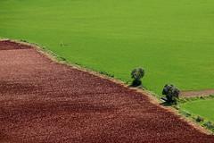 CAMPOS (ángel mateo) Tags: españa verde andalucía árbol contraste cádiz campos tierra hierba cultivo labranza marrón arcosdelafrontera ángelmartínmateo ángelmateo
