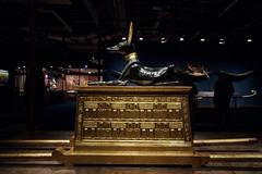 Tutankhamun's Treasures - Anubis Chest (vintagedept) Tags: manchester kingtut ancient chest exhibition replica egyptian gilded semmel artefact anubis tutankhamun gravegoods heritagekey museumofmuseums tutankhamunhistombandhistreasures burtial exhibition11067