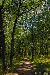 (Dmitry Gres) Tags: природа деревья зелень трава одесса украина воздух лето солнце отдых canon парк park фотошоп photoshop amateur любитель nature photo photographer фото фотограф 550d