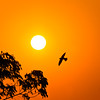 """""""Ignorance is the curse of God; knowledge is the wing wherewith we fly to heaven."""" (☆Mi☺Λmor☆) Tags: street travel sunset copyright india expedition silhouette canon spectacular landscape photography wings scenery mine hiking exotic danny swift dslr picturesque rajasthan maximus jodhpur dinesh kumar rajesthan navarathri 40d primeart ☆mi☺λmor☆ sidnid anjaanasafar primefineart dannymaximus fotocrafter dmaximus anjaanarahi"""
