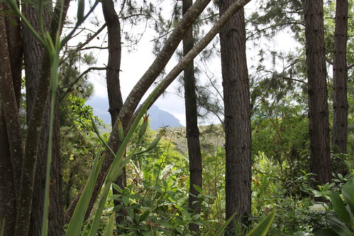 Fazenda Terramater Forest view