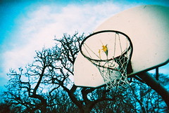 Basketball Ring & Tree (25ThC) Tags: camera film 35mm holga lomo xpro lomography fuji crossprocess 400 british analogue expired provia expiredfilm fujiprovia400 fujiprovia holga135bc 25thc