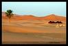"JAIMAS (DIAZ-GALIANO) Tags: canon atardecer sand colours colores morocco 1001nights marruecos palmera soe dunas 30d merzouga blueribbonwinner jaima kartpostal abigfave platinumphoto flickrdiamond theunforgettablepictures platinumheartaward goldstaraward goldstarawardgoldmedalwinner rubyphotographer diazgaliano ""flickraward"" platinumpeaceaward newgoldenseal 1001nightsmagiccity"