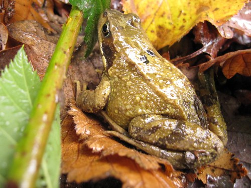 toad-neighbour