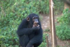 DSC_1327 (aquaboy24) Tags: africa sierraleone westafrica freetown