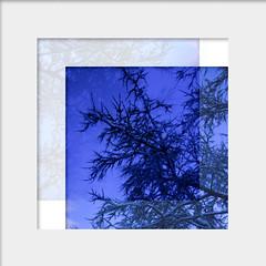 Experiment (finnarct) Tags: blue winter finland frame framing oulu bluemoment darkperiod hippopharhamnoides finnarct seabuckthron