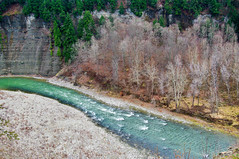 Letchworth State Park - River with Winter Trees