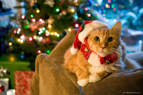 Purrfect Holiday Cheer