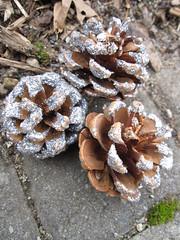 Glittered Pine Cones!