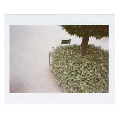 (Mastronardi) Tags: paris green chair happiness balance tuileries 12 135mm timida soclean provini manchi chicercatrova frenchpark fuckingcold fujipro400 faiblesse zenith12xp vogliadite tiragedelecture matteomastronardi pato™ promenadeclassiquenon northernfever greenpeaceselectedme tutrouvesquandtucherches gentletree ilovehiddenthings febbretanta