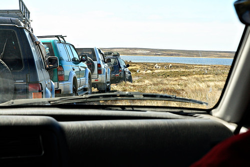 falkland islands 036 copy