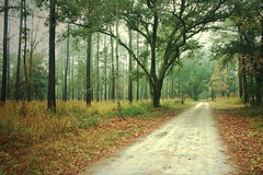 Go into the wilderness (Daniela Duncan) Tags: road trees mist nature ahead misty fog forest way woods path foggy southcarolina journey dirtroad straight forward edistoisland wildnerness canonrebelxsi bydanieladuncan