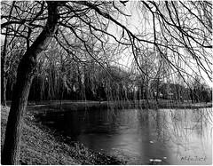 Au dtour..... (Mikejack59) Tags: blackandwhite france tree blancoynegro forest photoshop french noiretblanc pentax lac lille arbre fort nord cs4 k7 flickraward mikejack