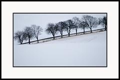 Windy Tree Lined Winter Lane - Tayside Scotland (Magdalen Green Photography) Tags: trees snow nature scotland frozen cool scottish tayside winterlandscape winterscene winterlane dsc5750 windytrees iaingordon windytreelinedwinterlane