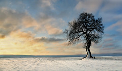 Winter Tree. (wentloog) Tags: uk sky cloud sun snow tree field wales sunrise canon landscape eos dawn countryside interestingness bravo gallery britain cymru cardiff explore caerdydd lone 5d lonely agriculture wfc canoneos5d stmellons wentloog welshflickrcymru stevegarrington
