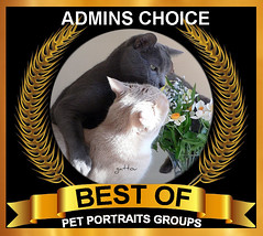 BEST OF ADMINS CHOICE Award 1