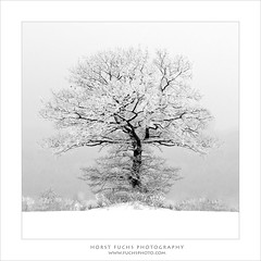 LONESOME TREE BW (fuchsphoto) Tags: schnee winter cold tree fog nebel natur foggy single highkey kalt homepage baum einsam lonesome weis neblig einzeln fc12 abgeschieden fuchsphotocom