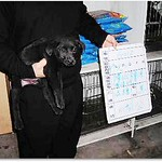 20100115『只缺一個機會!』雲林防治所公告.1月15日至1月21日止,米克斯幼犬x50幾隻、米克斯 thumbnail