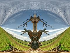 Artizen 2.8.5b Topaz detail and clean (Kulu40) Tags: tree photoshop nikon surreal gloucestershire handheld hdr tewkesbury d300 photomatix tonemapping 18200vr artizen topazclean topazadjust topazdetail